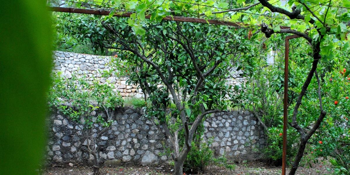 ApartmentSA4 garden
